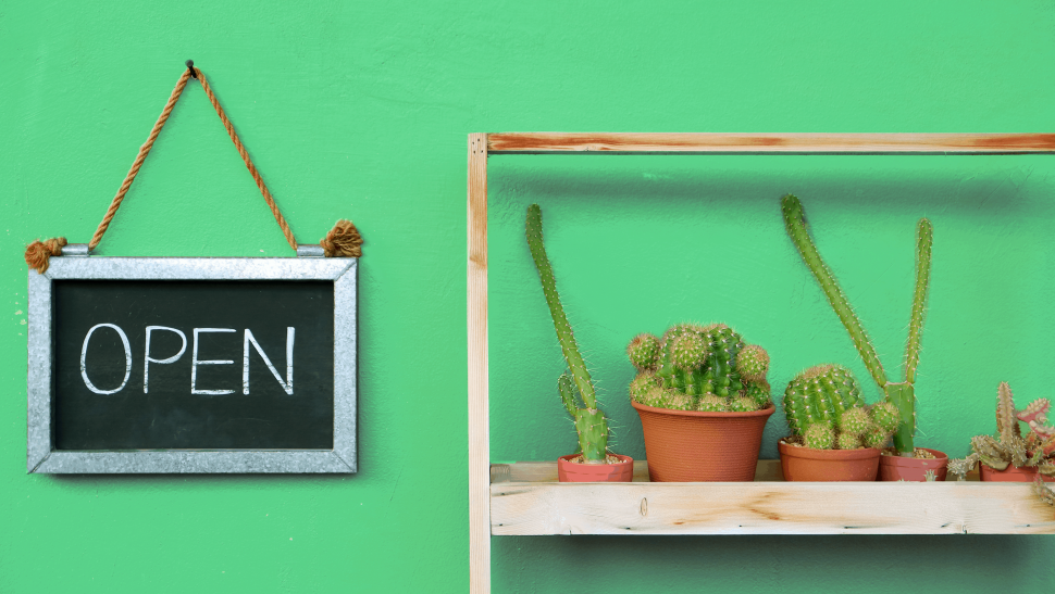 Open sign and cacti on green background.