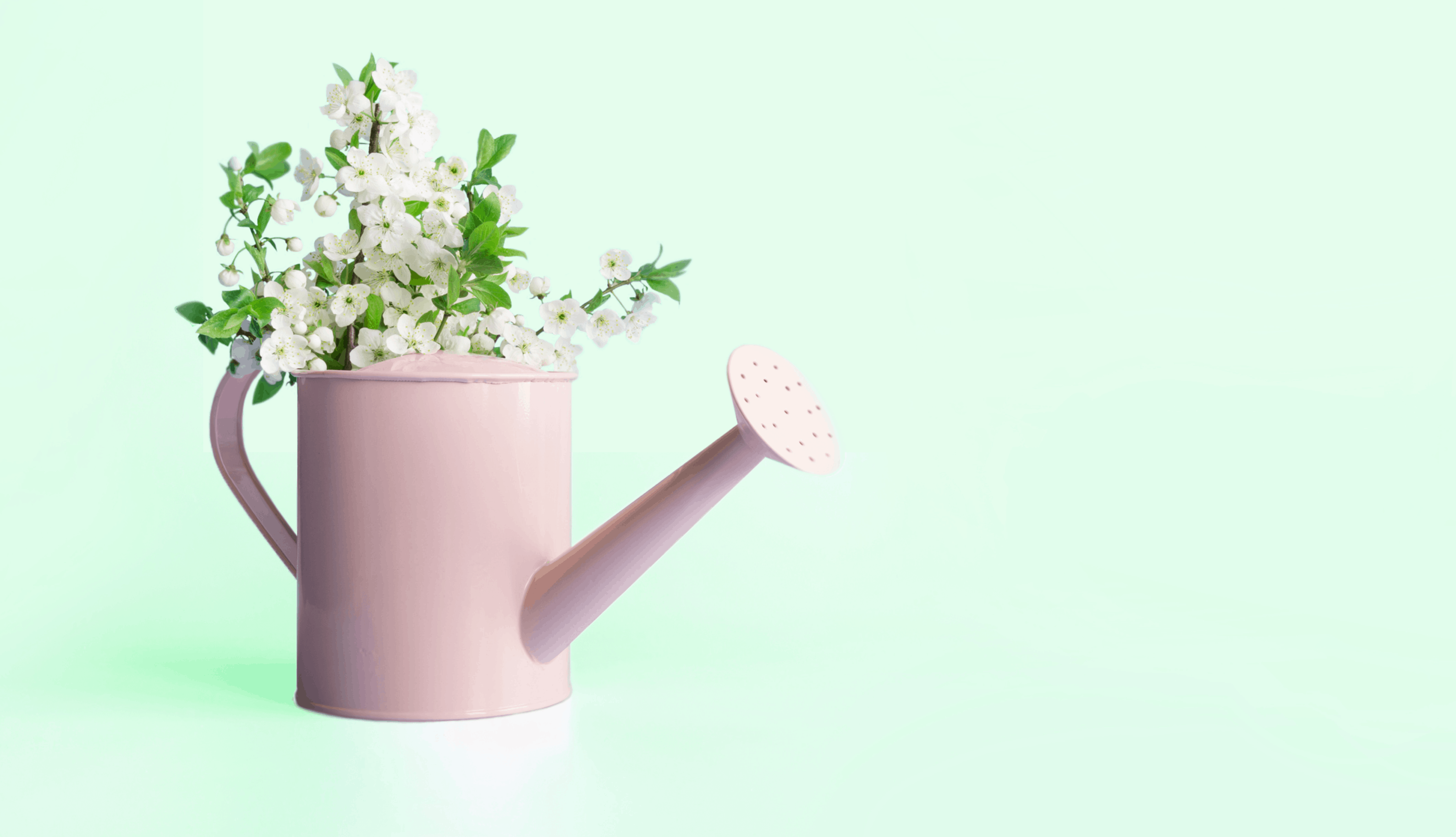 pink watering can with flowers on a green background